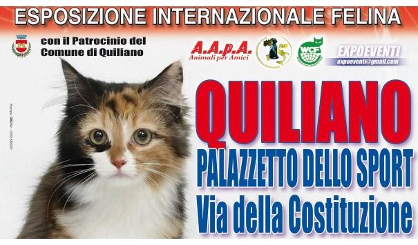 Quiliano-I Gatti più belli del MONDO
