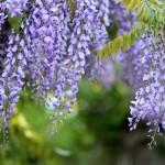 flowers-1363891_1280
