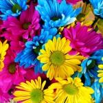daisies-54663_1280
