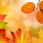 autumn-1649362__480