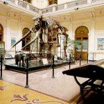 museo-storia-naturale02