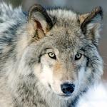 Un'Estate al Museo 2018 - Sulle tracce del lupo