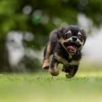 dog-1801419_1280