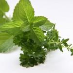herbs-3606074__480