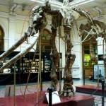 scheletro-di-elefante